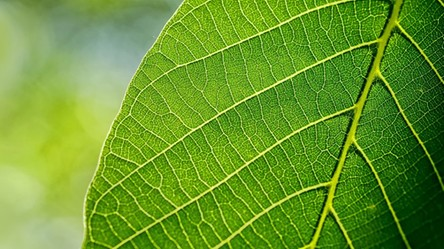 Powstały sztuczne liście, które zmieniają dwutlenek węgla w życiodajny tlen i paliwo