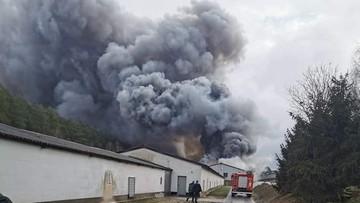 Pożar kurnika o powierzchni kilku tysięcy metrów. Z ogniem walczyli strażacy z dwóch powiatów