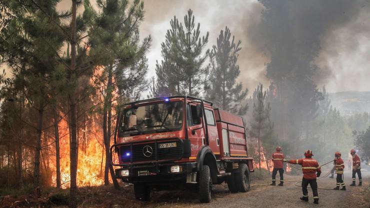 Z pożarem lasu w Portugalii walczy prawie tysiąc strażaków, niemal trzysta pojazdów i 11 samolotów