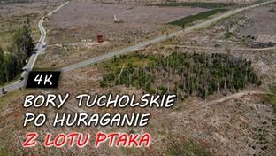09.10.2019 00:00 Bory Tucholskie po huraganie