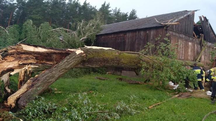 Ogromne drzewo zniszczyło oborę i przygniotło siedem krów