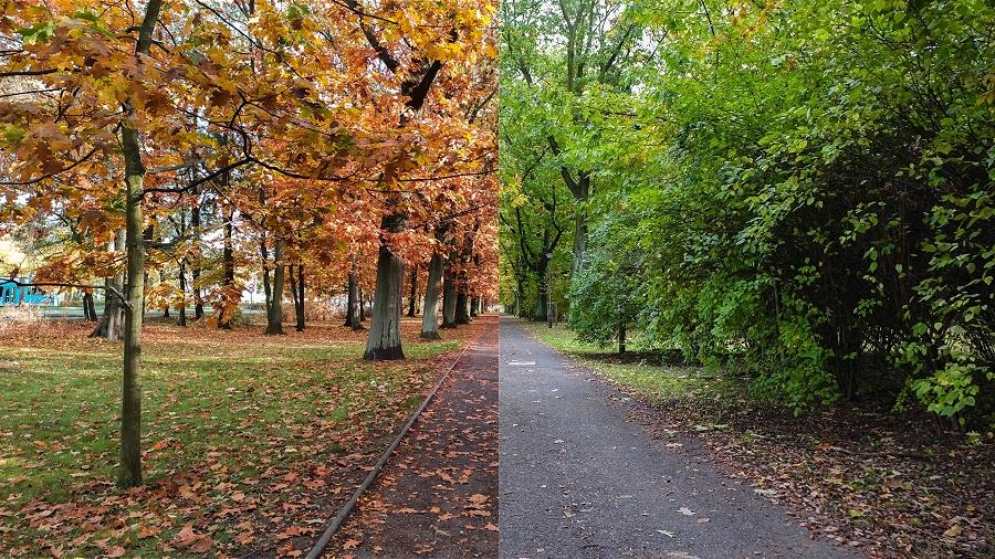 21-10-2019 11:00 Niezwykły projekt! Tak zmieniała się jesień w tym samym dniu i miejscu, na tle ostatnich 15 lat