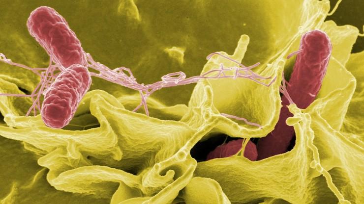 Śląskie: zatrucia salmonellą u czworga dzieci ze żłobków