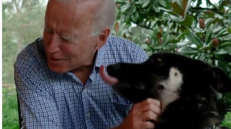 Major pierwszym adoptowanym psem, który zamieszka w Białym Domu