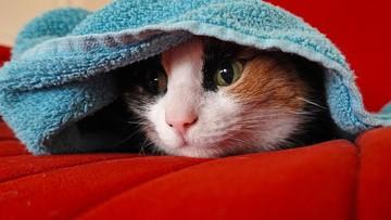 Najnowsze badania: ludzie mogą zarazić koronawirusem zwierzęta domowe