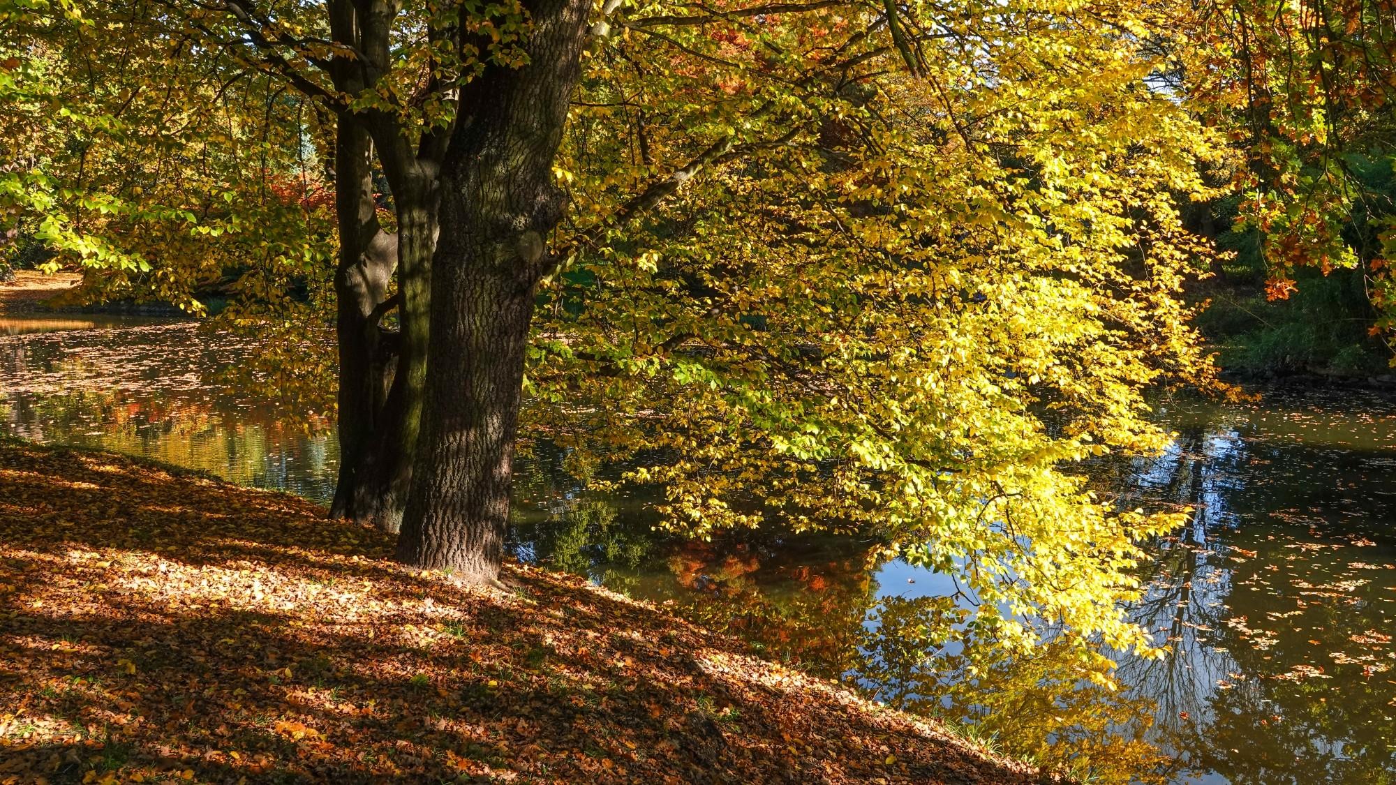 Wszystkie barwy jesieni - zdjęcie 3