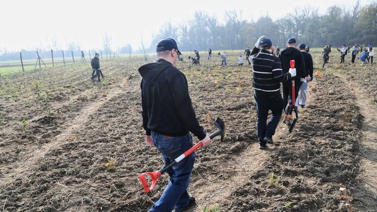 Kraków sadzi 25 tys. drzew z okazji Nobla dla Olgi Tokarczuk