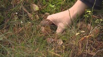 Zaginięcia grzybiarzy. Ciała seniorów odnaleziono po kilku dniach