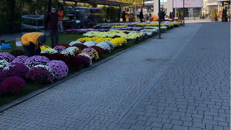 Miasta pomagają sprzedawcom kwiatów. Odkupują towar, zwalniają z opłat