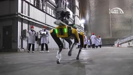 W Czarnobylu pojawił się robo-pies. Ostrzeże o wzroście promieniowania [FILM]