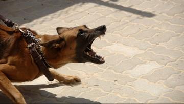 5-latka pogryziona przez psa. Trafiła do szpitala