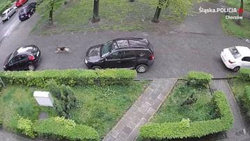 Na parkingu przebijano opony. Sprawcą nie był człowiek