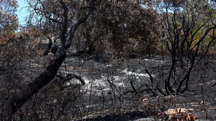 """Pożary na """"rajskiej wyspie"""". Strażacy uratowali osadę"""
