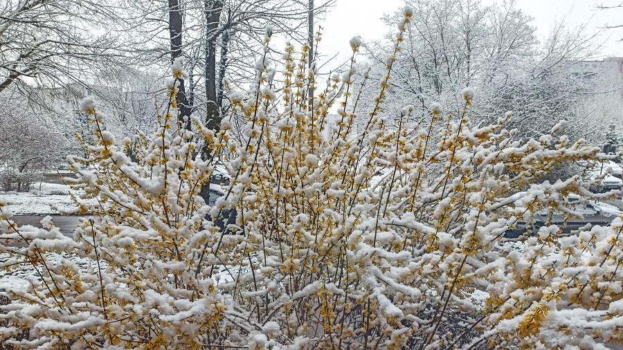 Pierwszy śnieg we Wrocławiu. Fot. Teresa / TwojaPogoda.pl