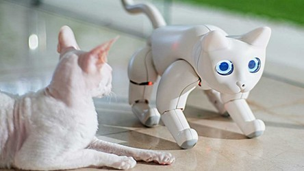 Inteligentny robotyczny pies już jest, więc teraz nadszedł czas na... kota