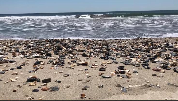 Zamiast śmieci, stosy muszli. Tak wyglądają plaże bez masy turystów