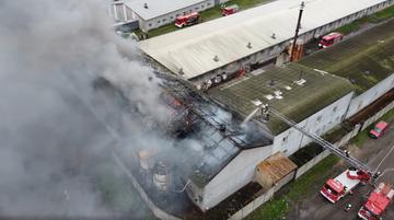 Wielki pożar chlewni w Wielkopolsce. Zginęły setki prosiąt [WIDEO]