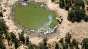 W Botswanie padło 330 słoni. Podano przyczynę
