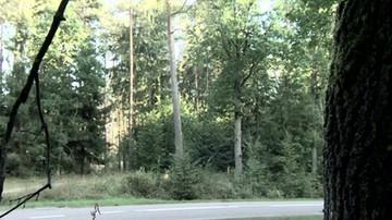 Ocena stanu drzew z samochodu. Gdy spadło na auto nie ma winnych