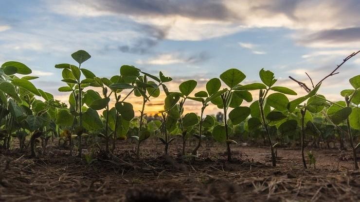 Mniej pestycydów, więcej ekologicznych gospodarstw. Co planuje UE na najbliższe 10 lat?
