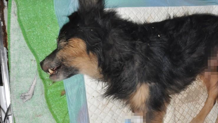 Nie żyje pies, którego wcześniej zakopano żywcem w Lublinie