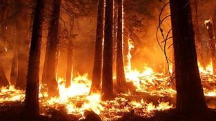 05-04-2020 09:00 Płoną napromieniowane lasy w Czarnobylu. Tymczasem wieje ze wschodu. Czy coś nam zagraża?