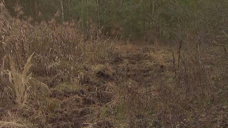 Ludzkie ciało na torfowisku. To zaginiony 67-latek z Łodzi