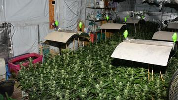 Pojechali do pożaru i odkryli... plantację marihuany