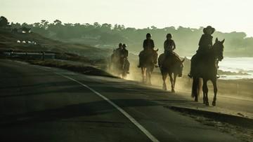 Polak wjechał w Niemczech w grupę jeźdźców na koniach