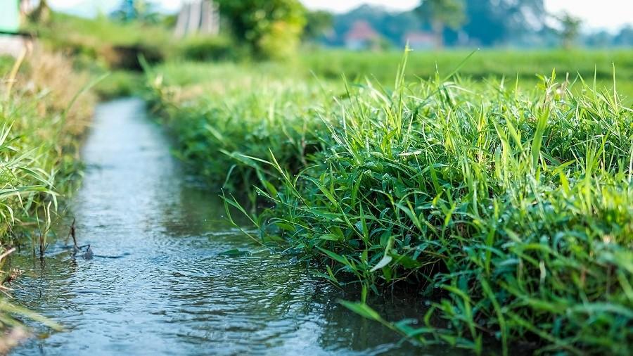 Zaczęły pylić trawy, które są koszmarem wielu alergików. Kiedy pogoda zacznie im sprzyjać?