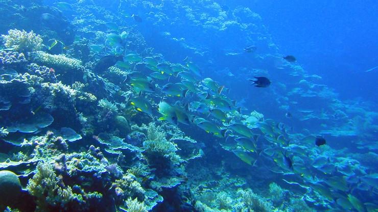 W tym kraju używanie kremu z filtrem jest zakazane. Tak władze chcą chronić rafy koralowe