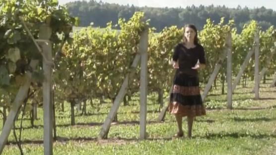 Copernicus - Rozwój nauki o winach w Polsce