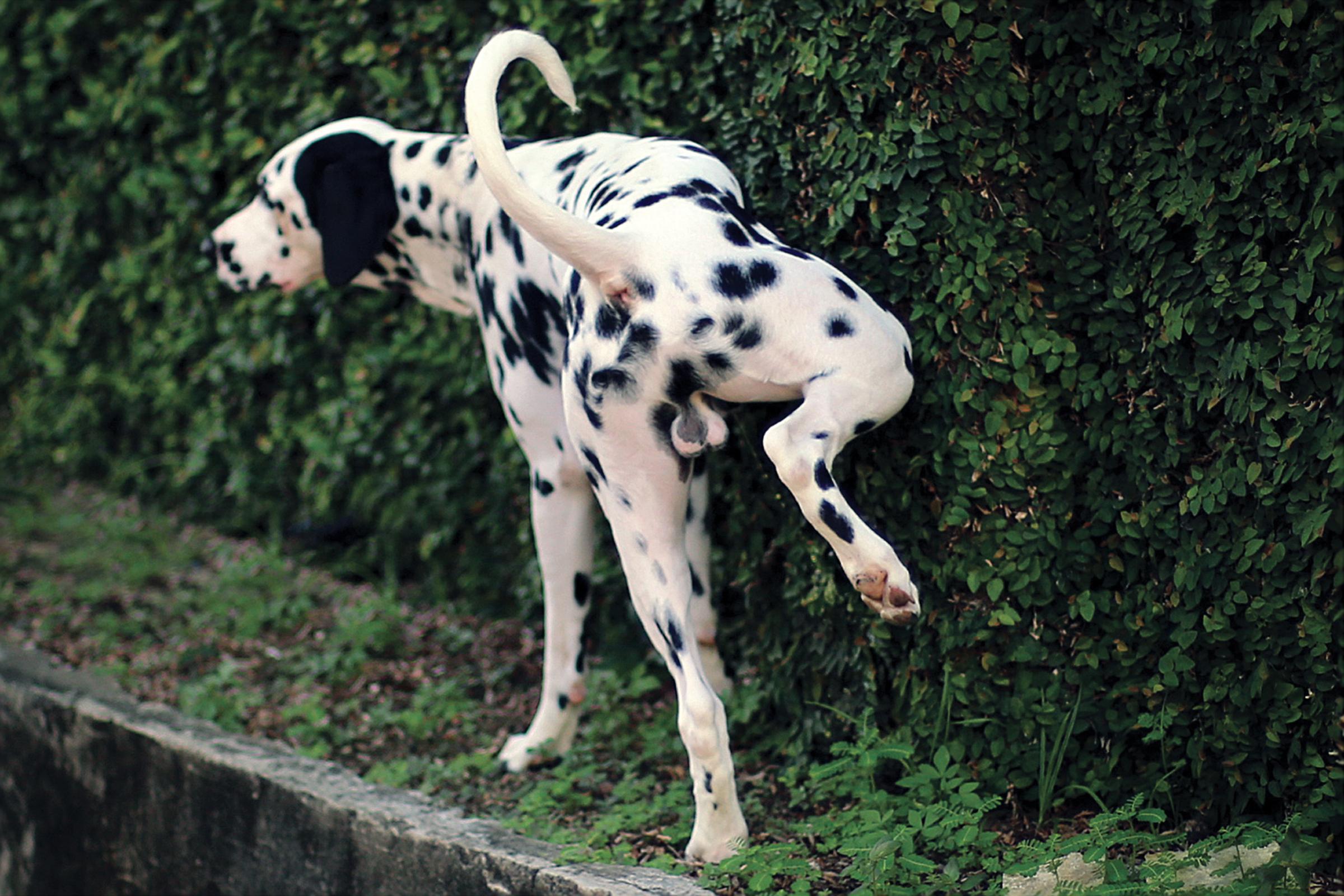 Widoczny na fałszywym zdjęciu pies został wycięty z tej fotografii