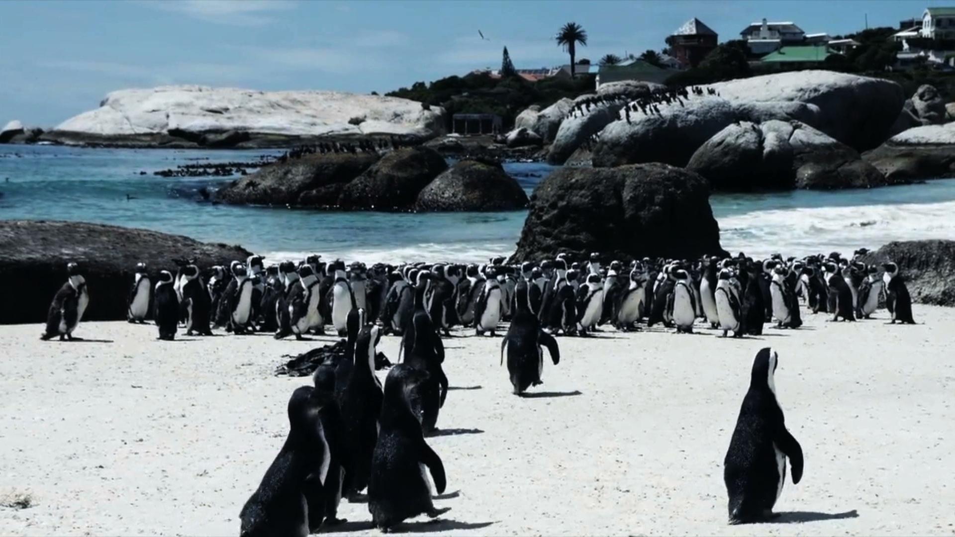 26.02.2019   Pingwiny, Afryka i polityczna dyskusja. Nietrafiony argument posła Kamińskiego