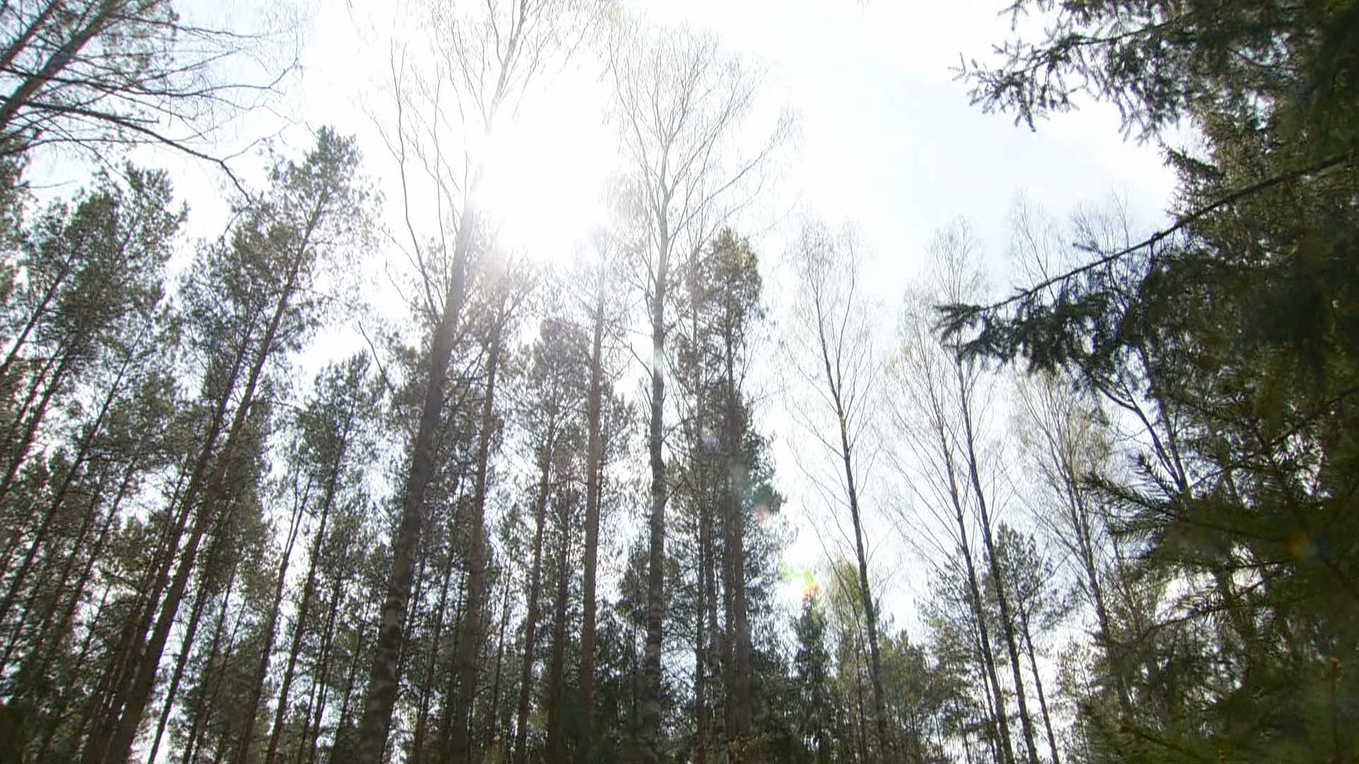 Susza w Polsce. Alert hydrologów nadal obowiązuje