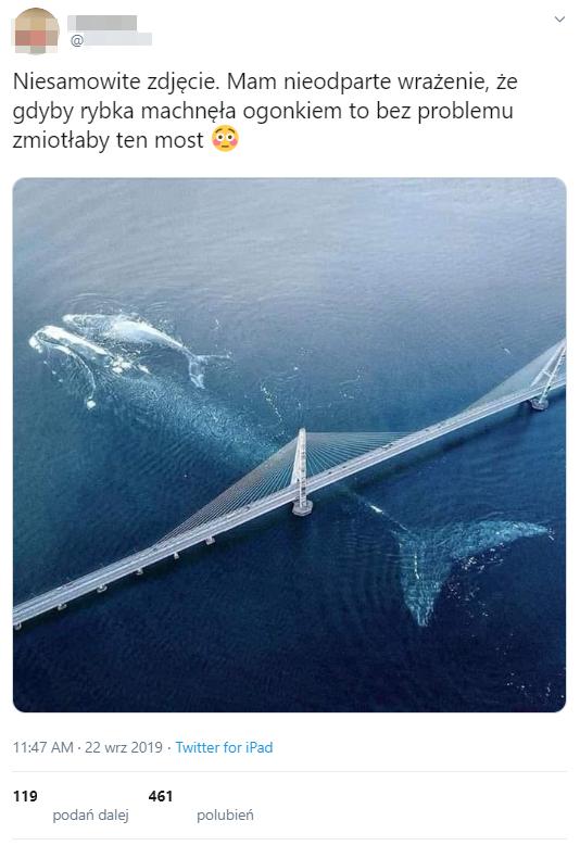 Wpis z grafiką przedstawiającą wieloryba